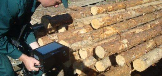 Таможенная экспертиза лесоматериалов