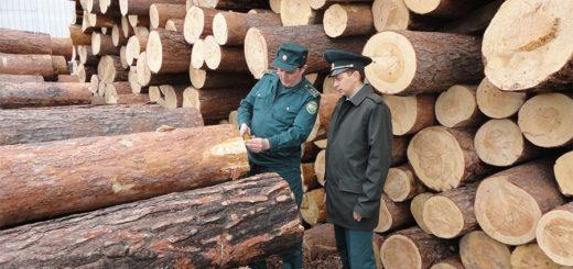 Таможенная экспертиза древесины